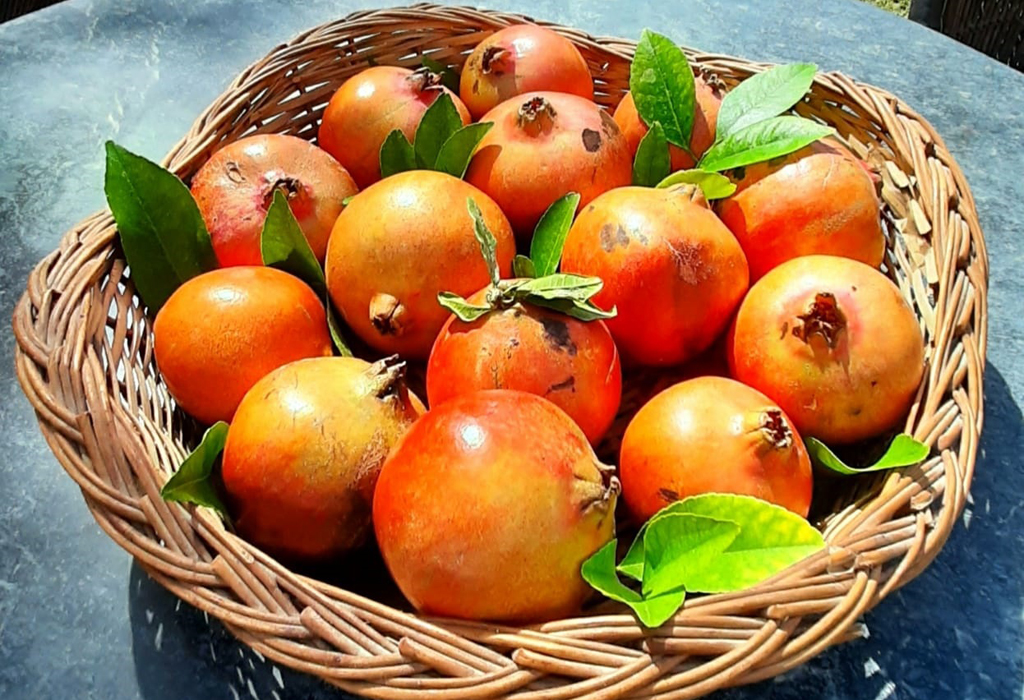 Mirvana pomegranate